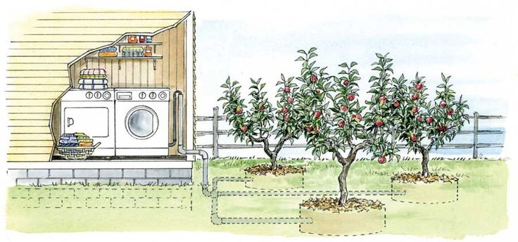 "Article: Tap into Greywater.  In the U.S. the average person uses about 40 gallons of water per day to bathe, wash dishes & clean clothes. Unfortunately, this water almost always goes straight down the drain.  This ""greywater"" could be put to good use to irrigate fruit trees & other plants. Greywater refers to all used household water (except water from toilets).  Diverting greywater from septic systems can extend their life. Read more:  motherearthnews.com/green-homes/greywater"