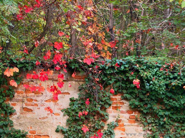 Bollate (Milano, Italy) - Autumn colors in the park of Villa Arconati