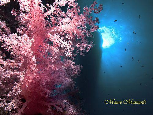 Beleza em côr-de-rosa. Z 1521B