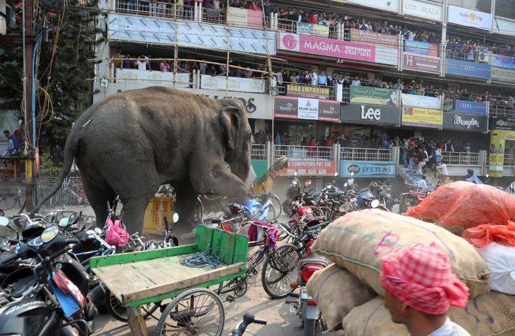 Słoń narozrabiał w mieście