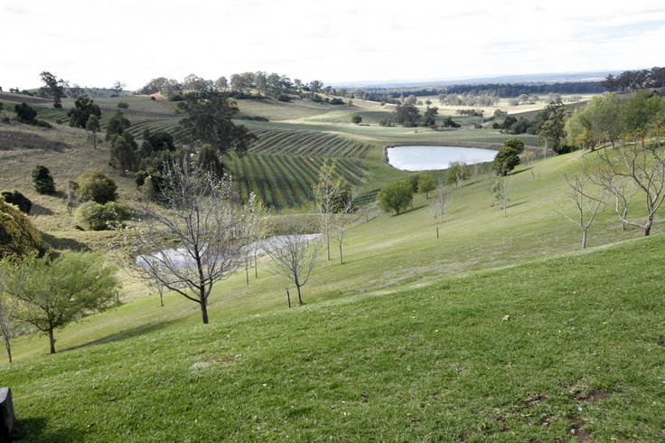 Amphitheatre - Mt View. Mount View, Hunter Valley, NSW