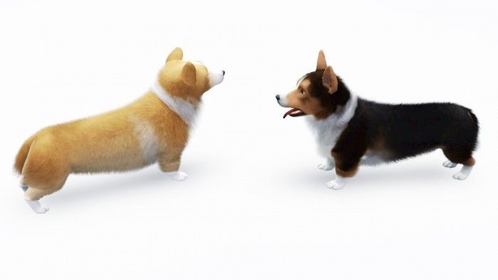 Welsh Corgis by krooooon - Sims 3 Downloads CC Caboodle