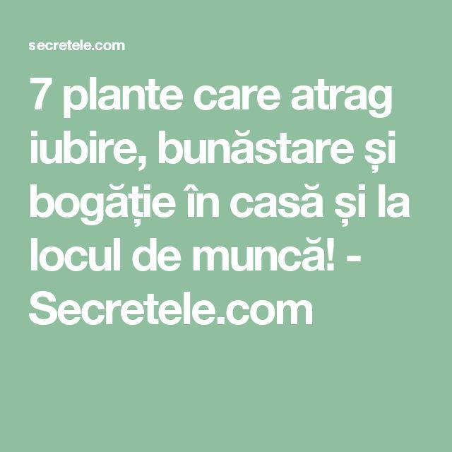 7 plante care atrag iubire, bunăstare și bogăție în casă și la locul de muncă! - Secretele.com