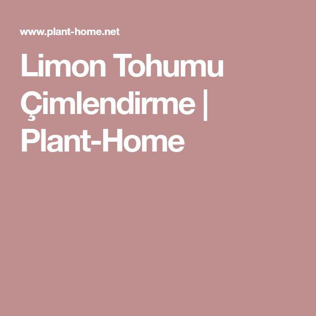 Limon Tohumu Çimlendirme   Plant-Home