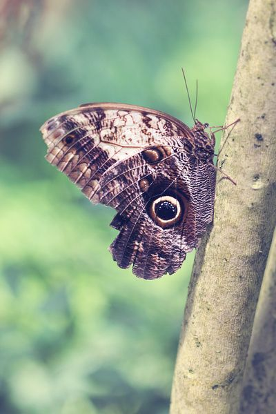 My Flight Is Powered By My Dreams - Macro Butterfly Photograph Art Print