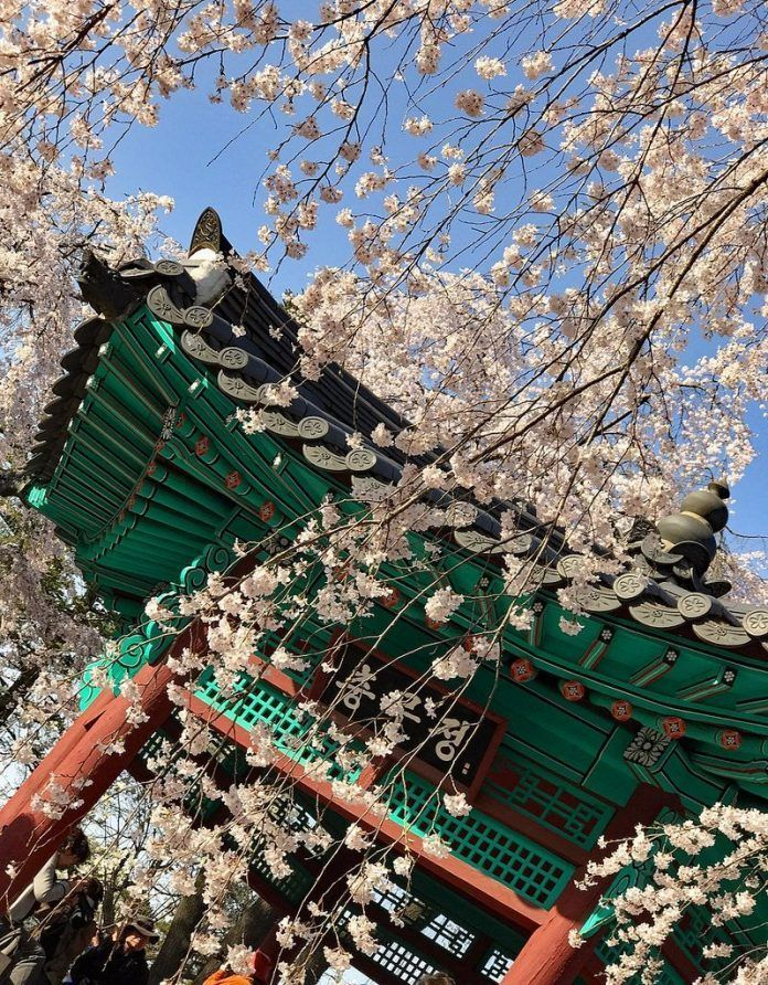Cherry Blossom In Korea 2019 Forecast The Best Time Top 9 Best Places To See Cherry Blossoms In Korea Livi Places To See National Cemetery Cherry Blossom