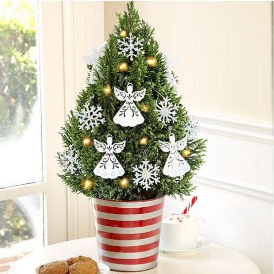Зимний декор из маленьких хвойных растений: 25 идей, включая новогодние