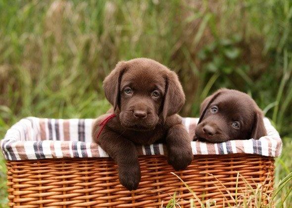 Basket of Chocolates