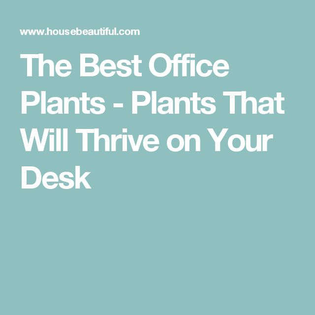 17 best ideas about office plants on pinterest plants for office inside plants and flowering - The best office plants ...