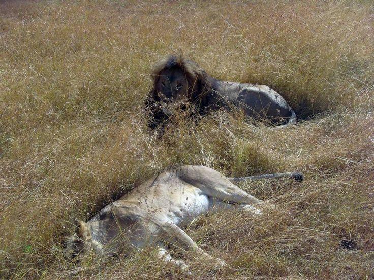 Ambosellin kansalispuuisto