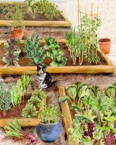 Small Vegetable Garden in a box !
