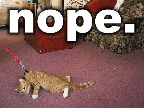 nopeCat, Dogs, Nope, Walks, Mondays Mornings, Funny Stuff, So Funny, Kitty, Animal