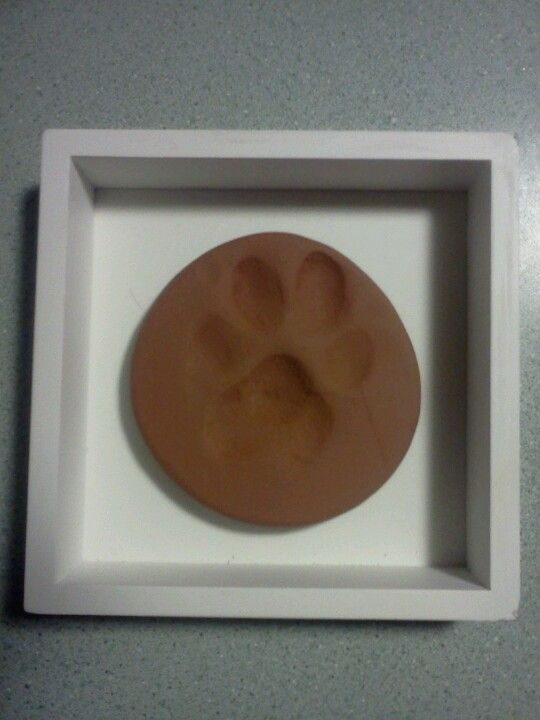 17 Best images about Paw print ideas on Pinterest ...