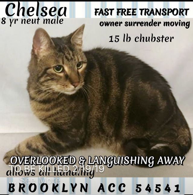 Chelsea Rescued02 19 19 To Die 02 19 19 With Images Cats Service Animal Dogs Online