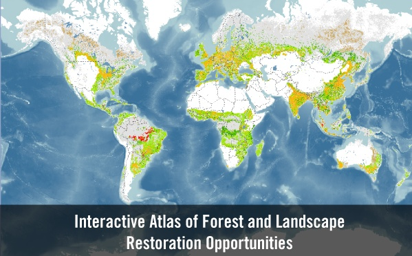 WRI's map viewer on restoration opportunities