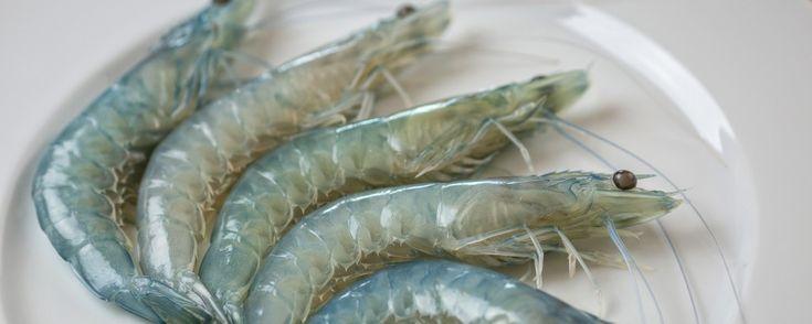 Shrimps aus ökologischer Zucht