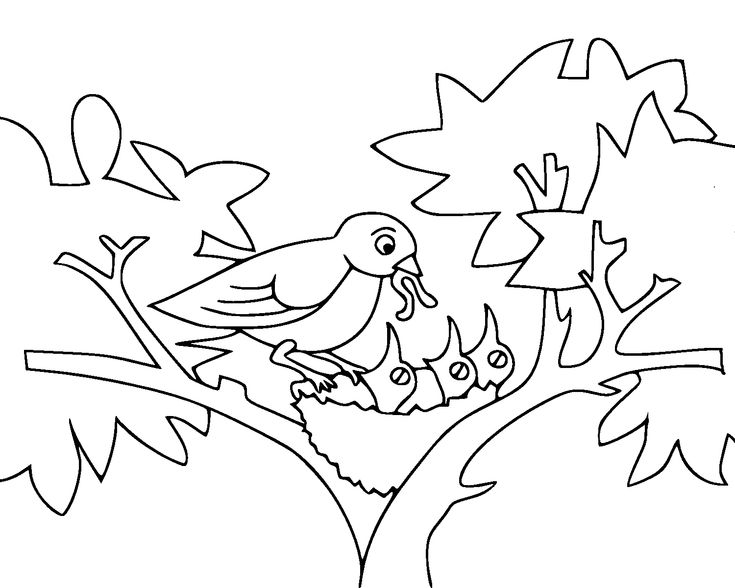 free coloring pages of baby birds in nest   FUN FREE ...