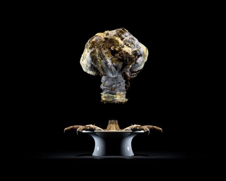 PROJECTS One Third | Cauliflower | Klaus Pichler