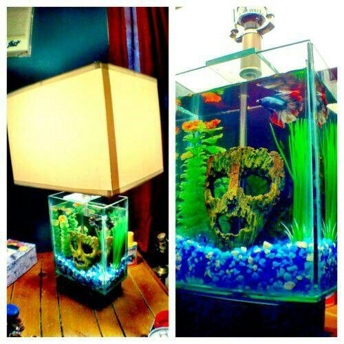 59 best aquariums fish tanks images on pinterest fish for Fish tank lamp