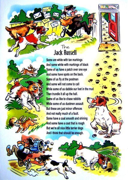 Description of  Jack Russell