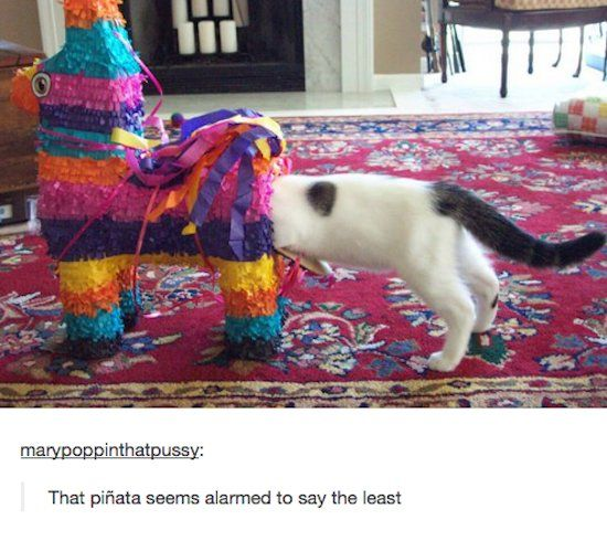 Piñata seems a bit alarmed