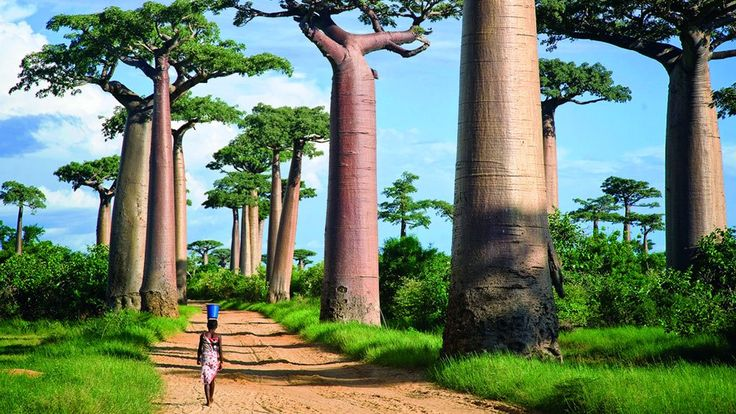Most incredibly unique famous trees in the world | Worldation