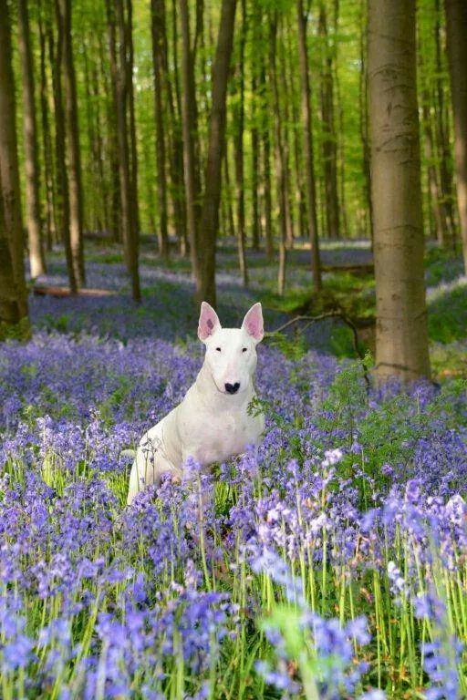 Found this pic on Pinterest, it is EX-ACT-LY how I imagined Heloise from I Capture The Castle, romping in the bluebell woods on May Day