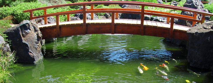 17 best night garden images on pinterest night garden for Natural koi pond design