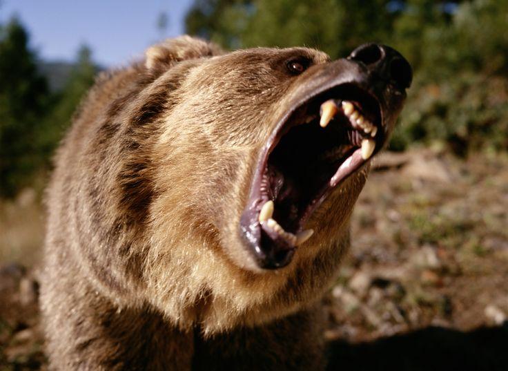 bearroarfacebookjpg dont take it so seriously