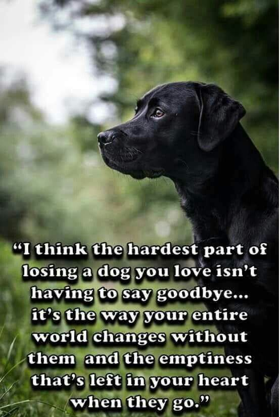 I think the hardest part of losing a dog...