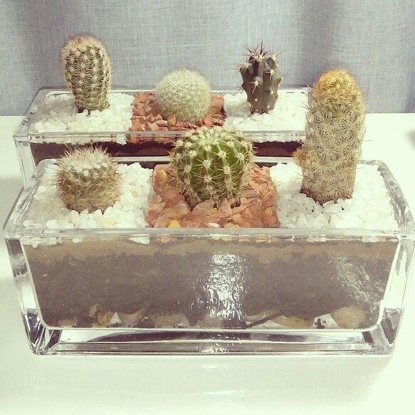 trios de cactus