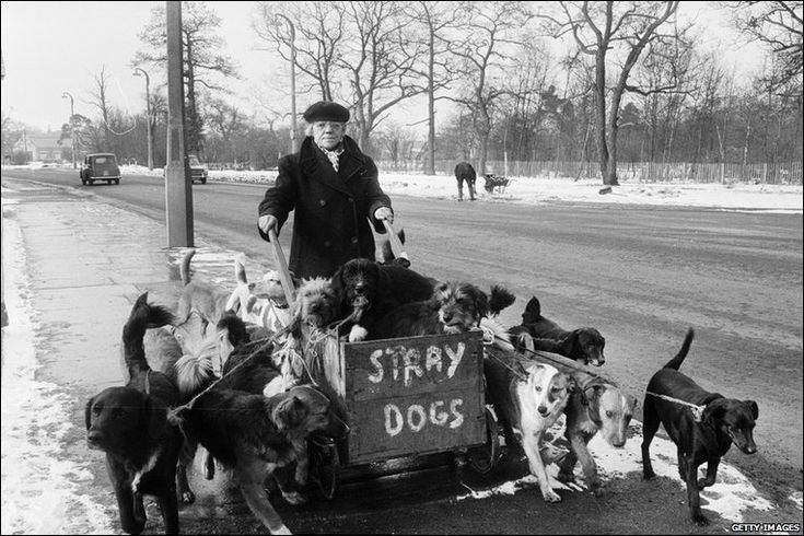 Camberley Kate and her stray dogs.