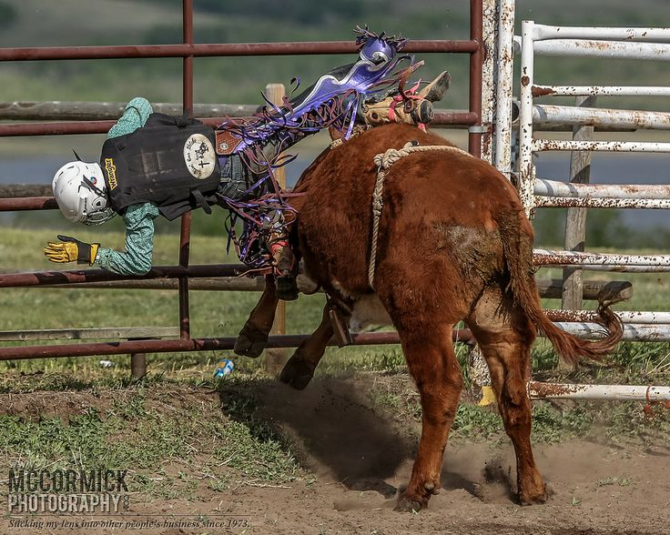 Gooseberry Lake : 4-H Rodeo 2014 : How Now Brown Cow | Flickr - Photo Sharing!