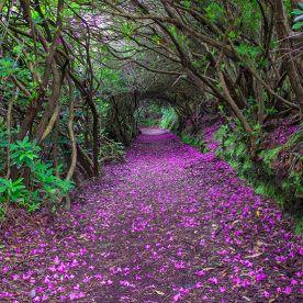 40 paisajes que te van a enamorar de Irlanda (FOTOS)
