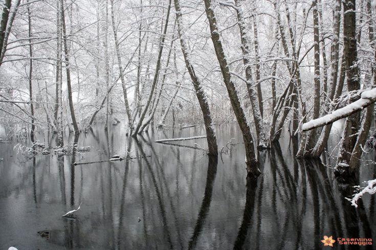 Il mantello bianco di neve e il paese avvolto nella nebbia: l'inverno spettacolare del Casentino