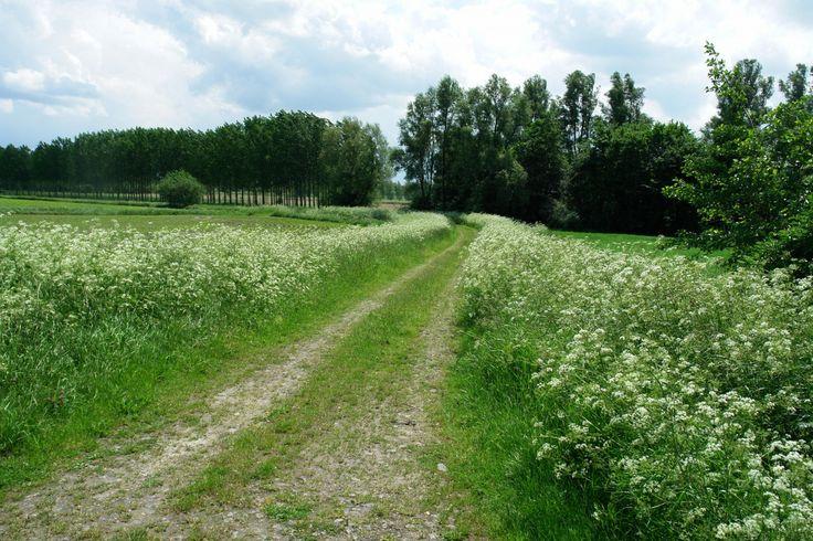 De Hertogin Hedwigepolder is een ingepolderd deel van natuurgebied het Verdronken Land van Saeftinghe.