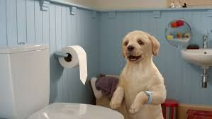 andrex puppy advert - Google Search