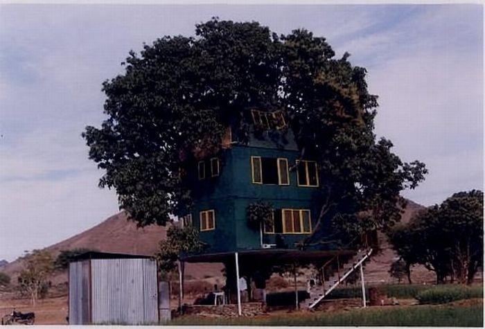 Mango Tree Home..: Mango Treehouse, Treehouse Escapes, Amazing Treehouses, Tree Houses, Trees, Treehouses Playhouses Simple, Awesome Tree, Odd Houses