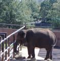 The Oklahoma City Zoo
