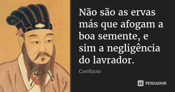 Não são as ervas más que afogam a boa semente, e sim a negligência do lavrador.... Frase de Confúcio.