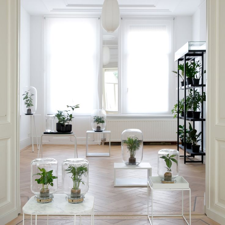 21 best deco images on Pinterest Gardening, Plants and Succulents