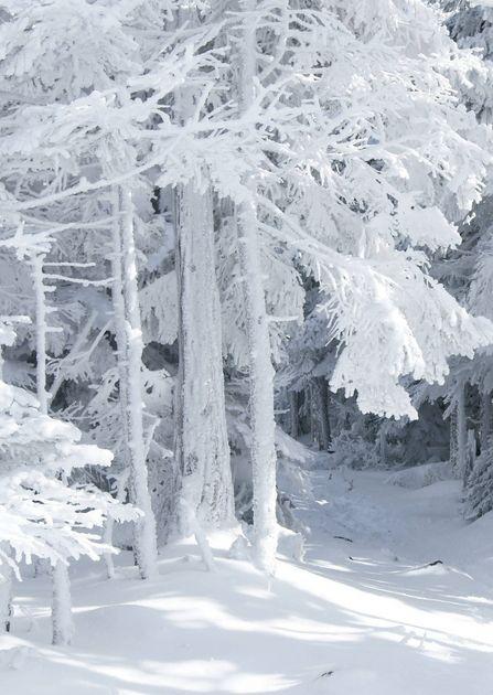 Galerie de fonds d'écran Winter Landscapes
