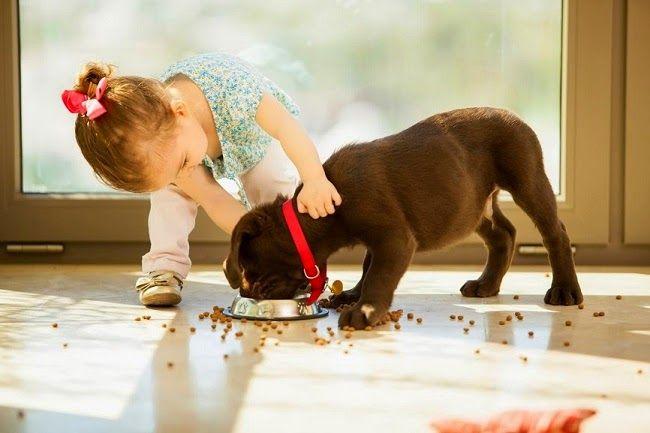 Zasady #żywienia psów
