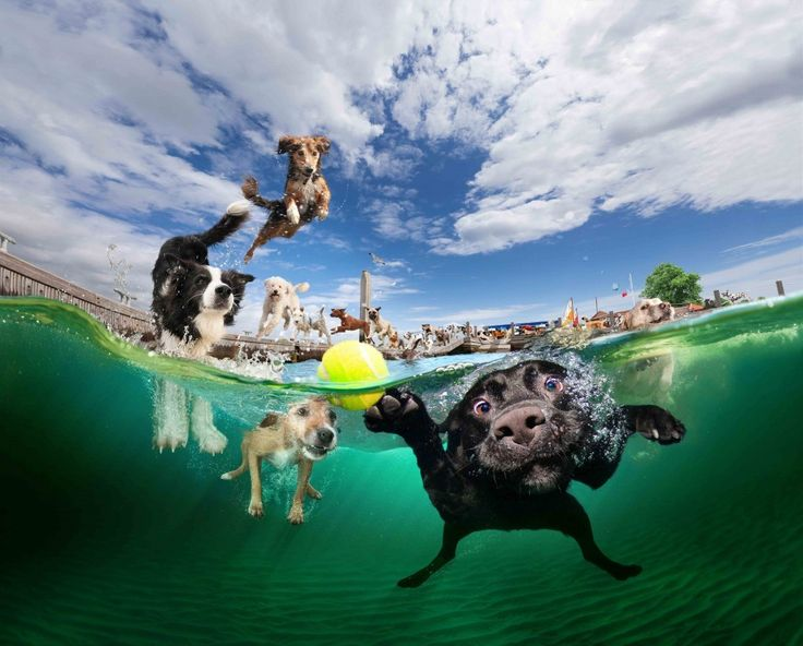 Dogs who love to swim! Who knew dogs were so cute underwater?