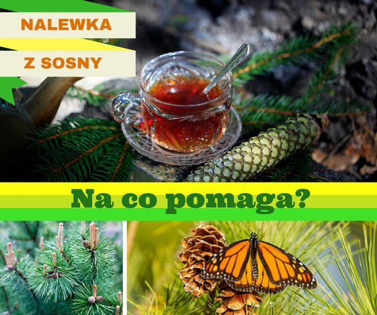 Dziś zrób nalewkę z sosny na odporność (Na prawdę pomaga!)>> http://skracaj.com/aaka.html