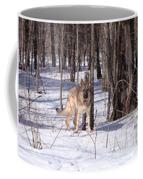 Dog Coffee Mug featuring the photograph Dog Breed German Shepherd by Lyssjart Sj