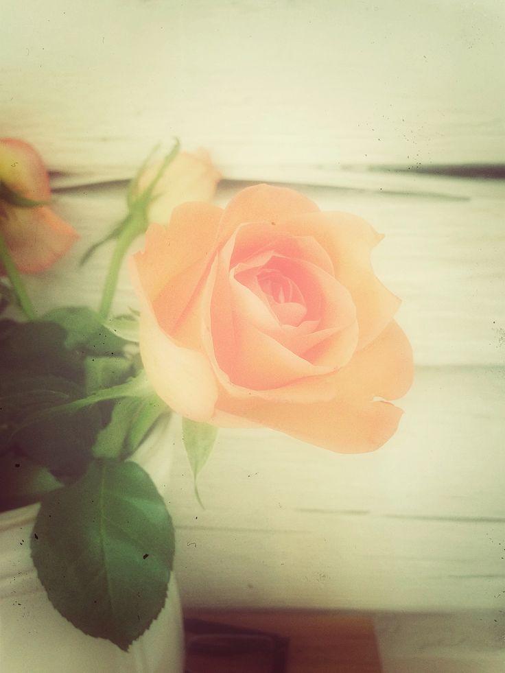 Ros Rose