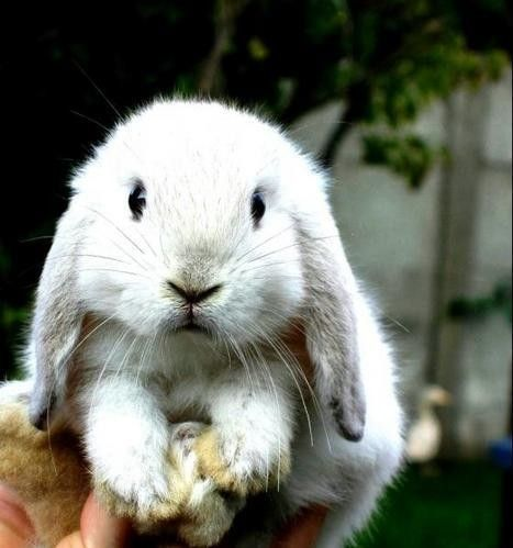 cute baby bunny <3 by jane77