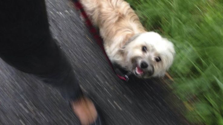 Hunde: Blog von Stefanie Gaugl: Wenn der Hund den Halter Gassi führt