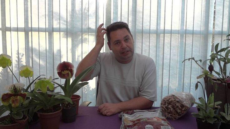 """Como Cultivar Orquídea Paphiopedilum """"Sapatinho"""" - www.orquidario4e.com.br"""